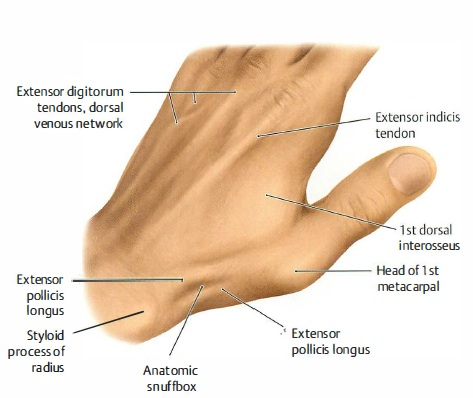 Scaphoid Fracture - Hand & Elbow Conditions